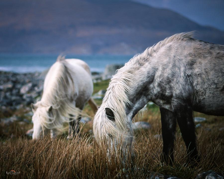 ponies-1