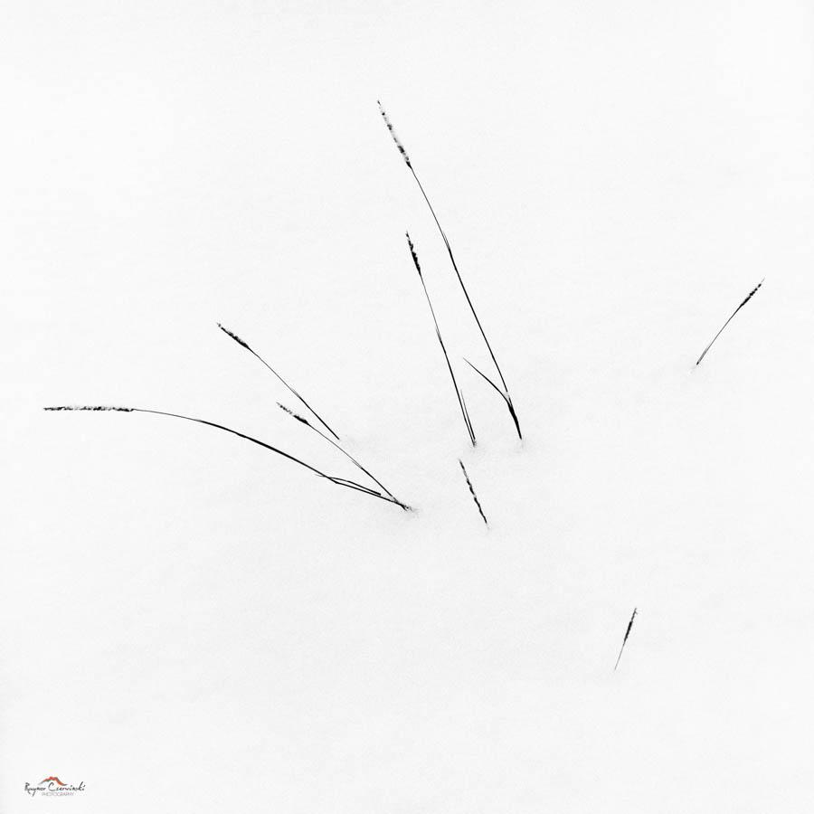 Minitures-13