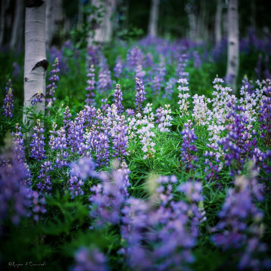flowers2_1